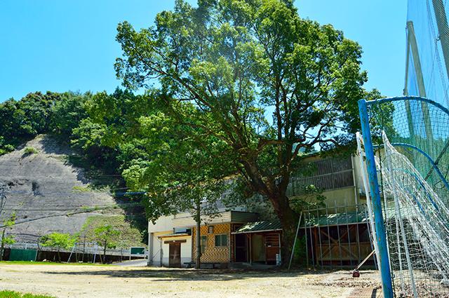 宮地東小学校 大きな木